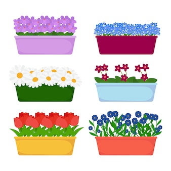 Домашние и садовые цветы в длинных горшках на белом фоне