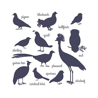 白で隔離されるベクトル鳥シルエット