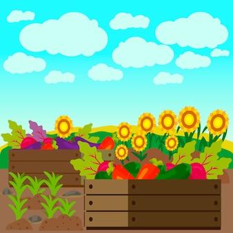 Овощи, подсолнух на поле векторная иллюстрация