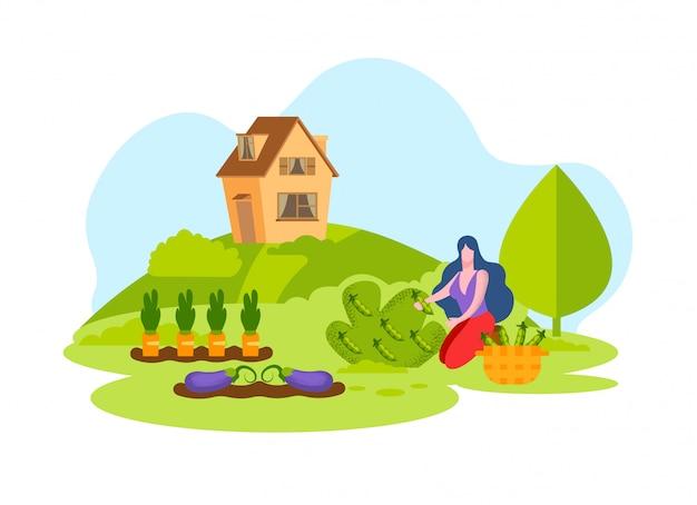 Женщина сбор свежих овощей урожай корзина.