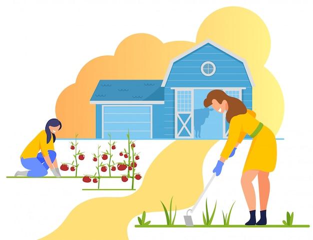 女性農家の雑草と庭のトマトの世話