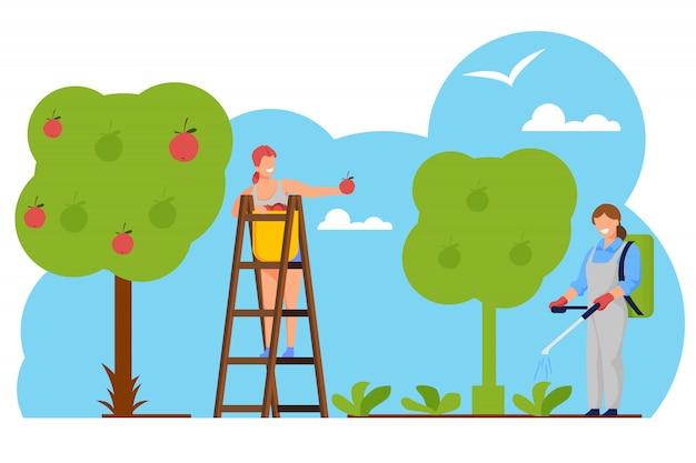 女性農家は果樹園でバスケットにリンゴを選ぶ