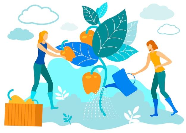 Женщины поливают растения. вырасти перец на ферме