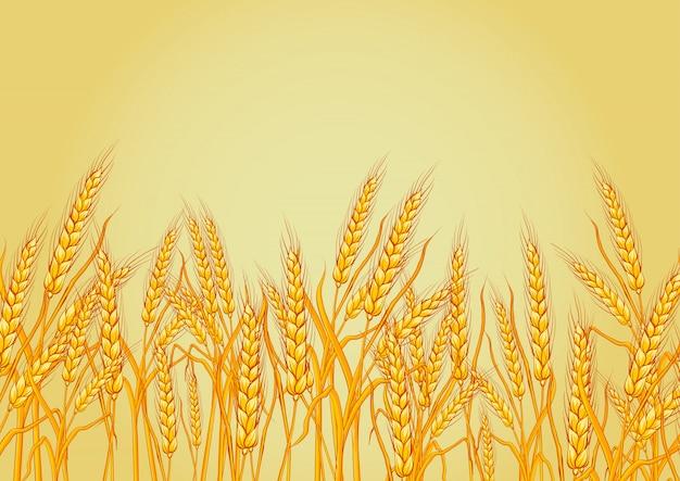Пшеница изолированная на желтой