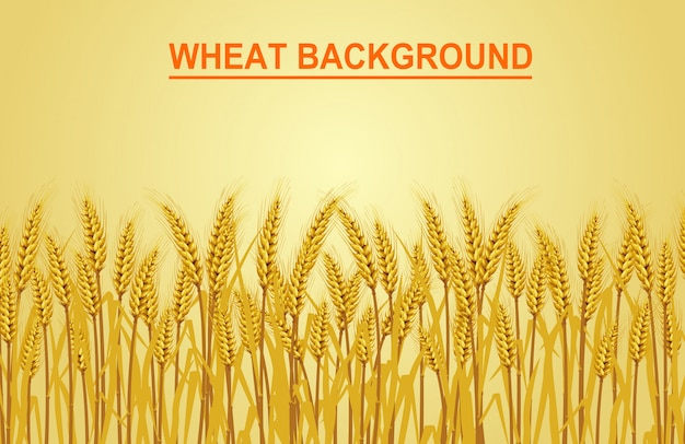 黄色の背景に小麦。ベクター