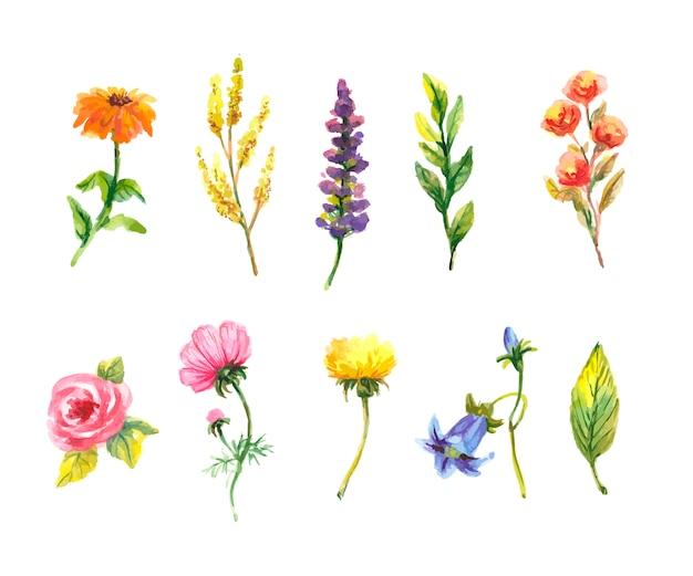 Цветочный набор. красочная цветочная коллекция с листьями и цветами, рисунок акварелью