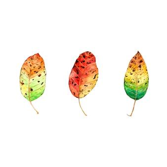 Осенние листья установлены