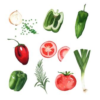 野菜要素デザイン水彩
