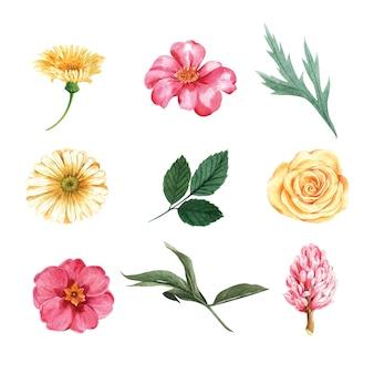 水彩バイオレット牡丹と紅葉、ペイントイラスト要素分離のセット