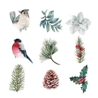 Акварельные зимние растения и коллекция птиц