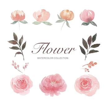 水彩牡丹、バラ、花のつぼみ、白で隔離される要素のイラストのセット。