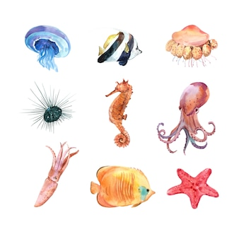 孤立した水彩海の動物のセット
