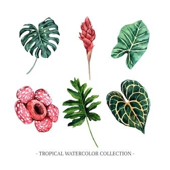 装飾用の白い背景の様々な分離水彩葉イラスト。