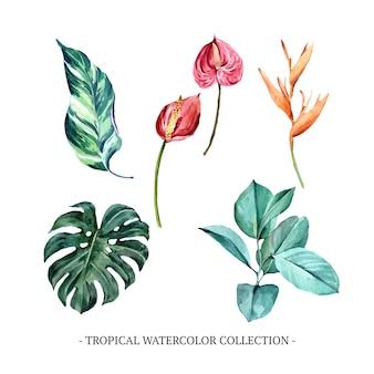 さまざまな孤立した葉の水彩画のセット