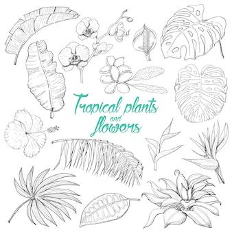 孤立した熱帯植物と花のセット