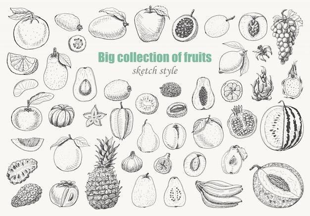 Большая коллекция фруктов