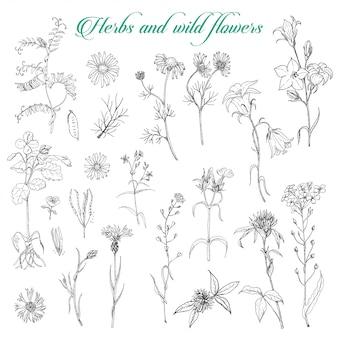 孤立したハーブと野生の花のセット