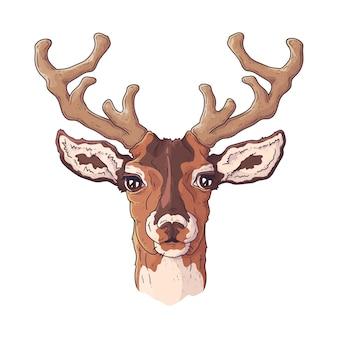 かわいい現実的な鹿の肖像画。