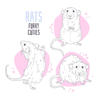Рисованной иллюстрации. симпатичная реалистичная крыса.