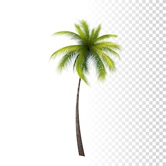 Зеленая классическая пальма