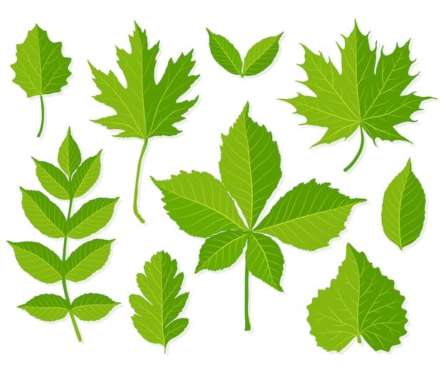 白で隔離される緑の葉のセット
