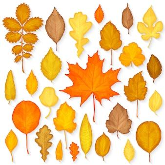 秋の葉セット