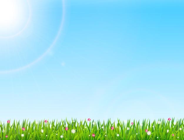 緑の草と花と春または夏の自然の背景。図