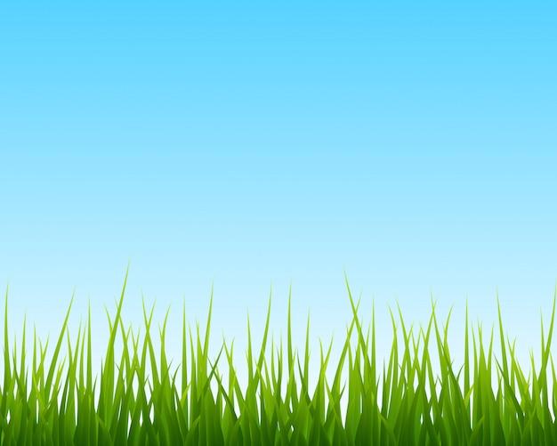 Маленькая зеленая трава, голубое небо бесшовного фона