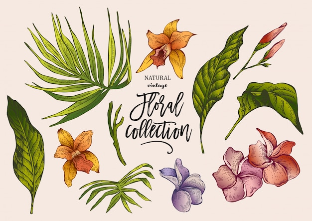 夏の熱帯ビンテージ花コレクション