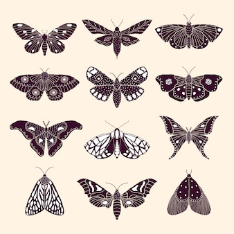 Бабочки и бабочки