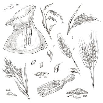 Колоски пшеницы или ячменя, посевы в мешке