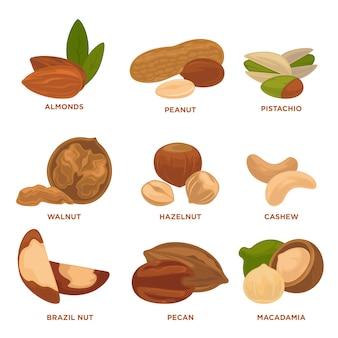 Спелые орехи и семена векторные иллюстрации.