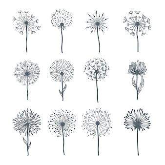 開花のすべての段階で柔らかい野生のタンポポ