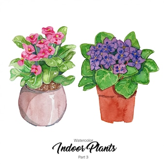 水彩屋内植物イラスト
