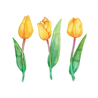 Акварельные иллюстрации пакет желтые тюльпаны