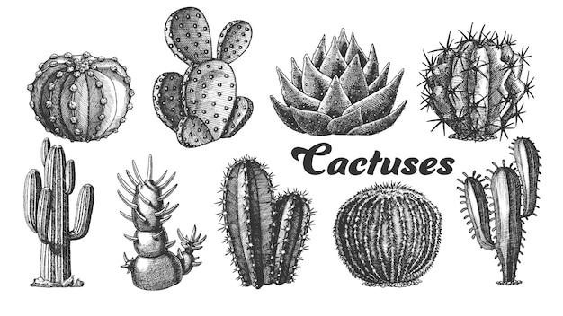 砂漠の植物サボテンのイラスト。