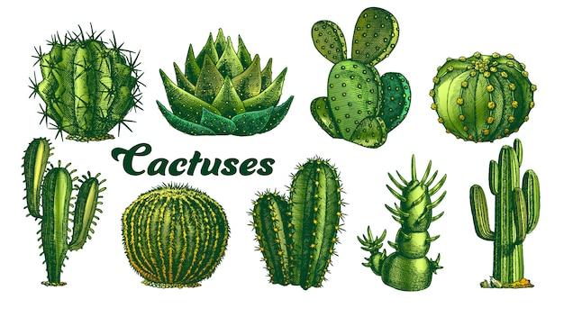 色の砂漠の植物サボテンのイラスト。