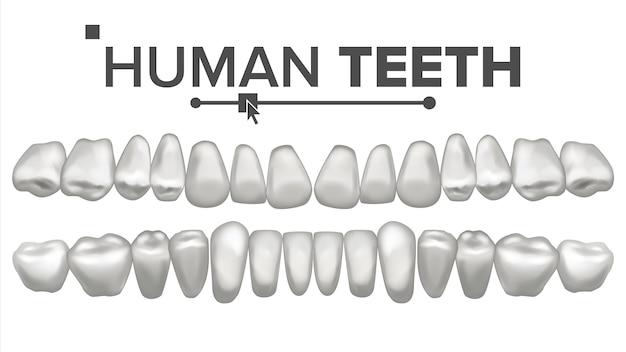 Иллюстрация набор зубов