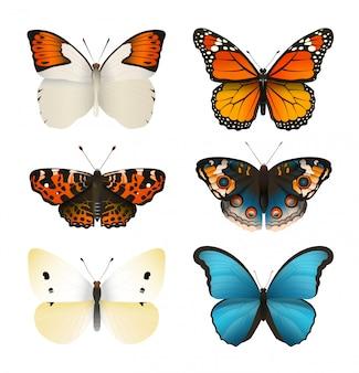 蝶ベクトルを設定します。カラフルな平らな蝶。リアルなカラーグラデーション。