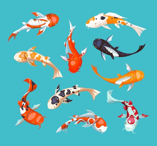 Карпы кои. кои японская рыба иллюстрации. китайская золотая рыбка. кои символ богатства. аквариум иллюстрации. рыба бесшовные модели.