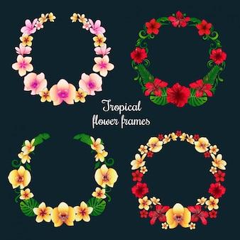 熱帯の花のフレームとタグ