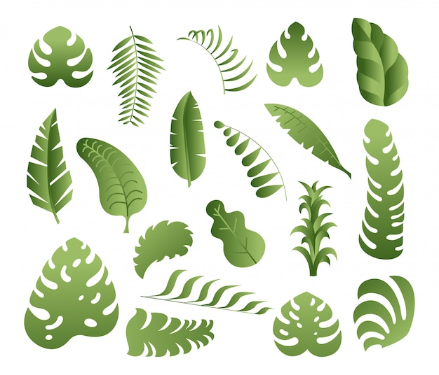 熱帯のエキゾチックな葉セット