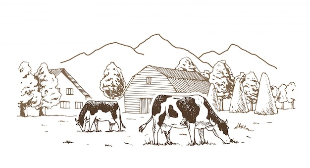 Коровы пасутся на лугу.