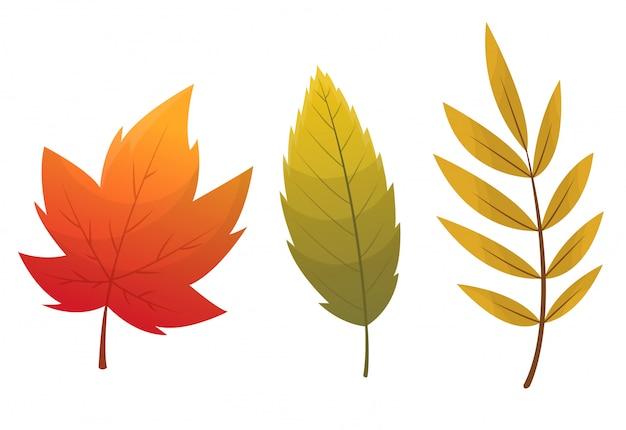 Осенняя коллекция листьев. набор осенних листьев, изолированные