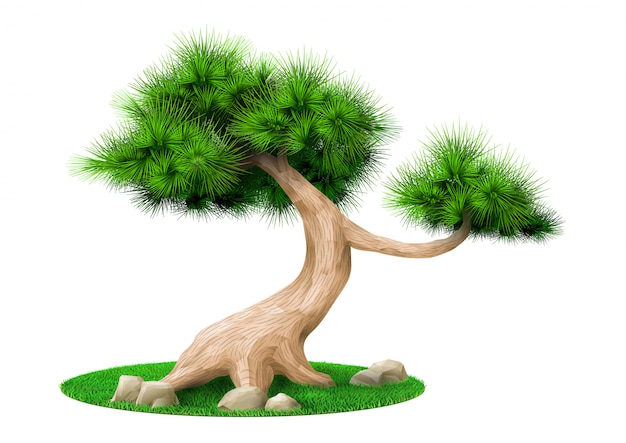 分離された装飾的な盆栽の木の松