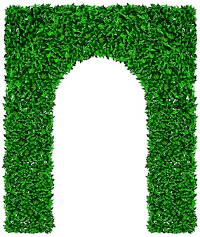 緑のツタのブドウのアーチのテクスチャ