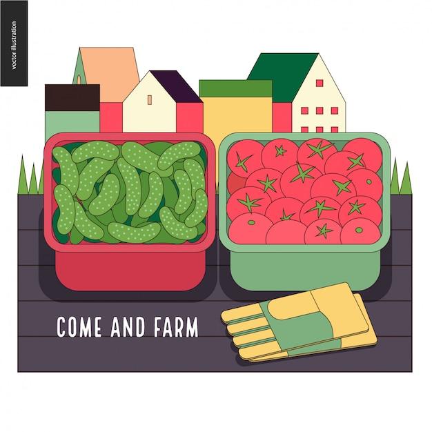 都市農業とガーデニング - きゅうりとトマトの収穫