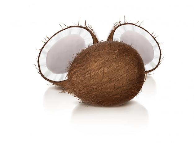 全体と半分の壊れたココナッツ