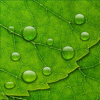 Векторные капли воды на фоне зеленых листьев