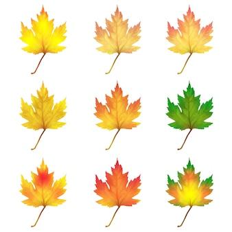 Реалистичные кленовые листья на белом фоне